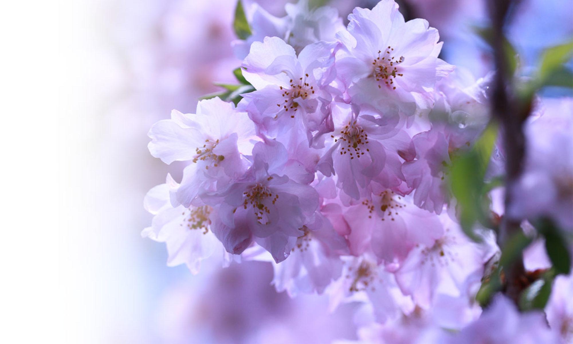 Aroma&Nursing